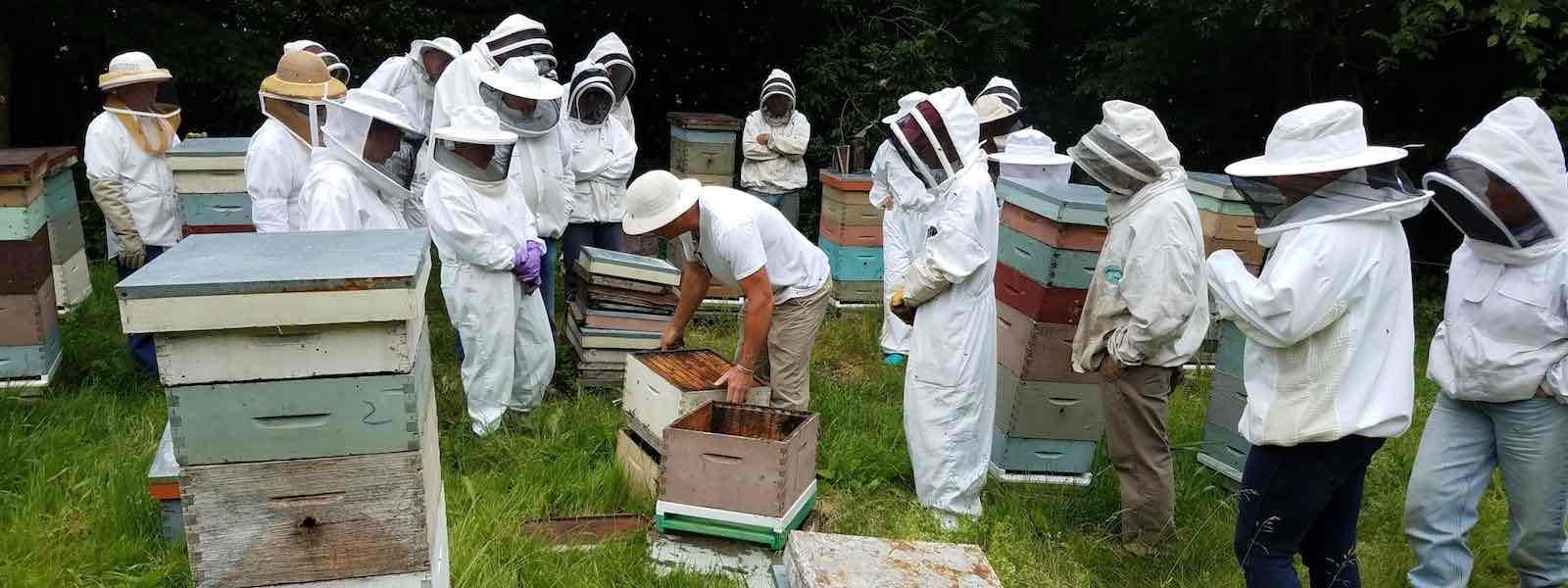 Interested in becoming a beekeeper?