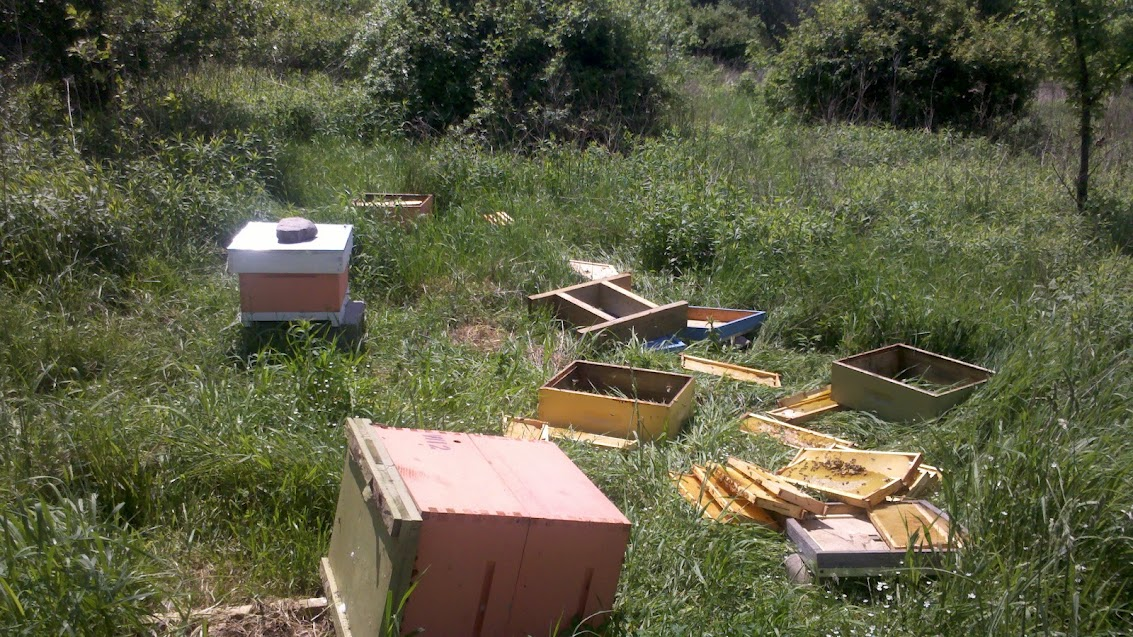 bear damage/heavenly honey apiary 2012