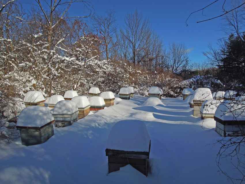 December 2012 hives of the Champlain Valley Apiaries, Shelburne